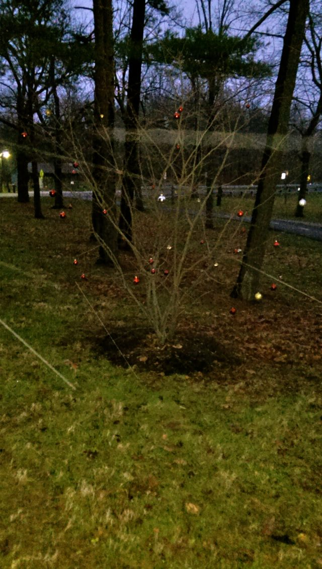 Park Tree 2