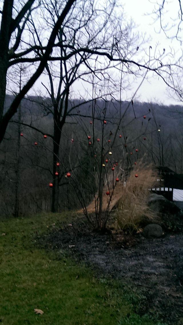 Park Tree 4