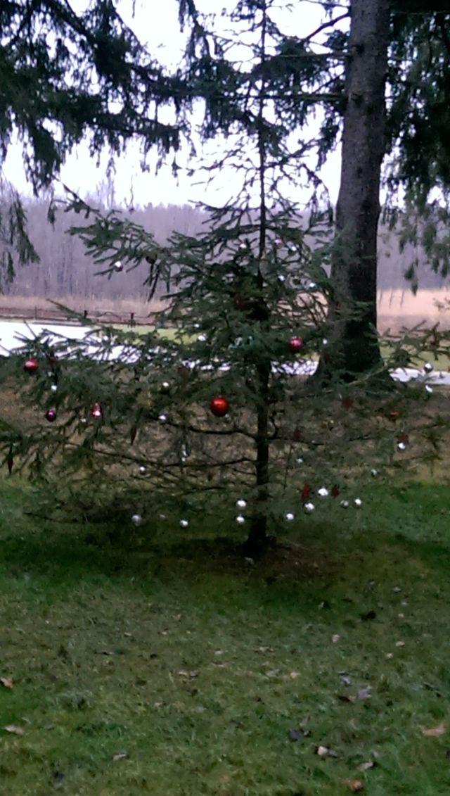 Park Tree 3